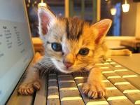 Visit CuteOverload!
